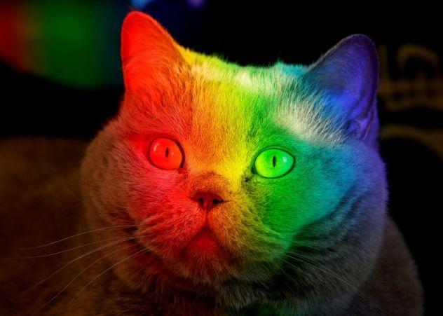 Katzen gibt es jetzt auch farbig